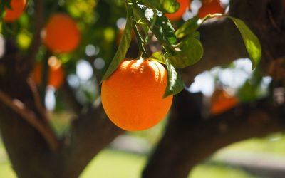 Arance di Sicilia: garanzia di salute e genuinità
